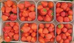 ягода клубники Флорина